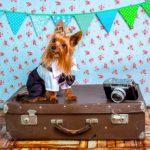 Jak bezpiecznie i komfortowo podróżować samolotem z naszym zwierzakiem?